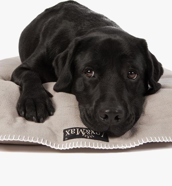 Hondenkussens kopen